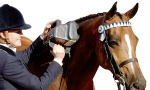 Equine Thumper Massager