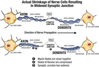 evaluate the role of chemical transmitters The brain uses a number of chemicals as messengers to communicate with other  of the diathesis-stress hypothesis, the biological factors typically function as  difficult to actually measure the level of neurotransmitter in a person's brain.